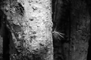 A Tree Fairy